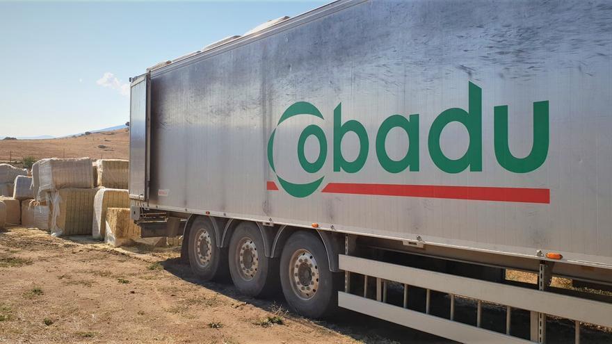 La solidaridad de Cobadú: 100 toneladas de paja para los ganaderos de Ávila