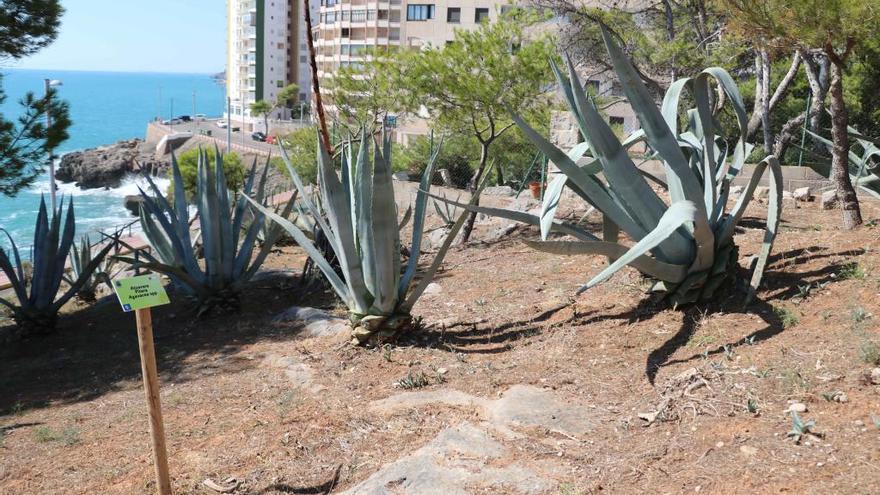 La Torre del Rei suma un nuevo itinerario botánico