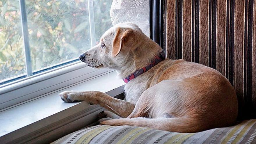 Prohibido dejar al perro solo en casa
