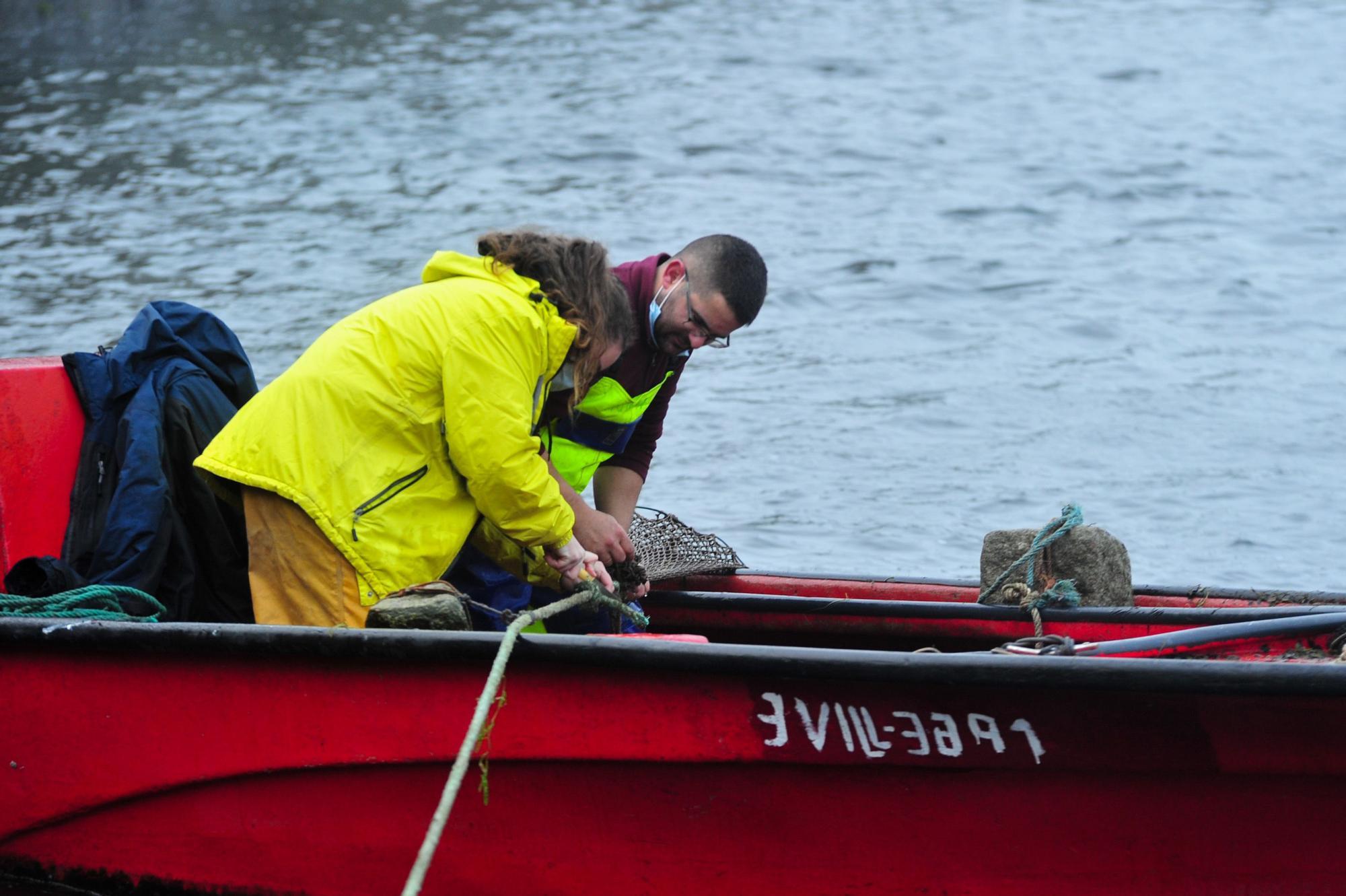 Las primeras lampreas salen a 50 euros