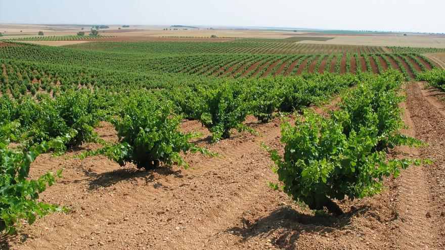 Así es el nuevo reglamento para la Denominación de Origen Tierra del Vino de Zamora