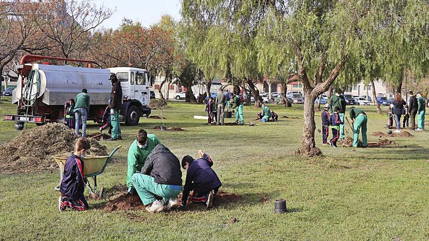 Plantación de árboles del colegio San Pedro