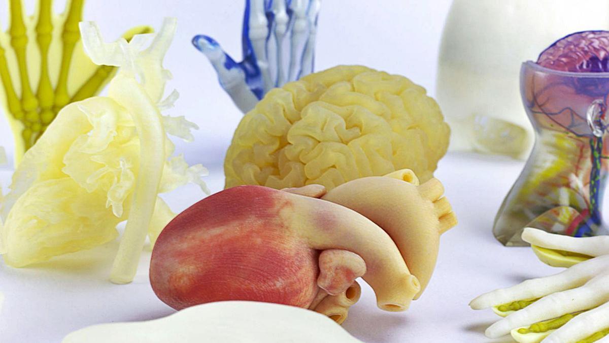 Réplicas de órganos humanos  desarrolladas por AIJU en  Ibi.