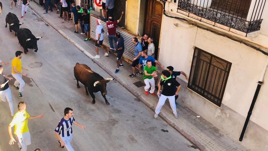 Los 'bous' regresarán a las calles de Castellón tras año y medio