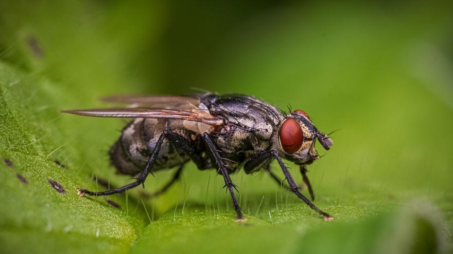La planta que debes tener en casa para acabar con las molestas moscas