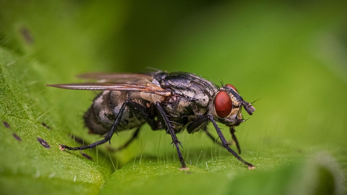 Acabar de las moscas sin esfuerzo es más fácil.