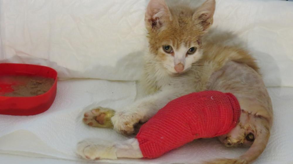 Gatos heridos o enfermos de las calles de Paterna.