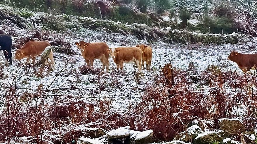 Primeras nevadas del otoño en A Lama y Ponte Caldelas