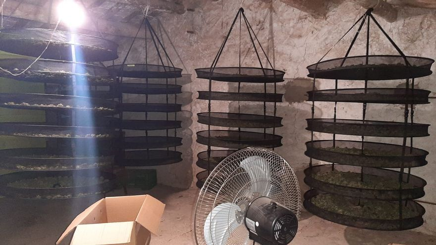 Detenen un veí de Tous que tenia més de 22 quilos de cabdells de marihuana en una masia
