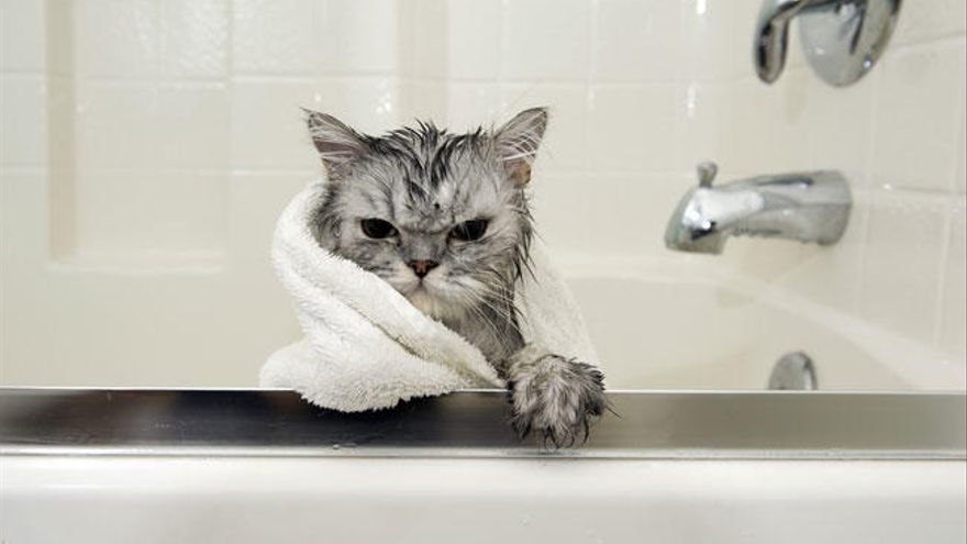 Las 10 cosas que los gatos odian de los humanos