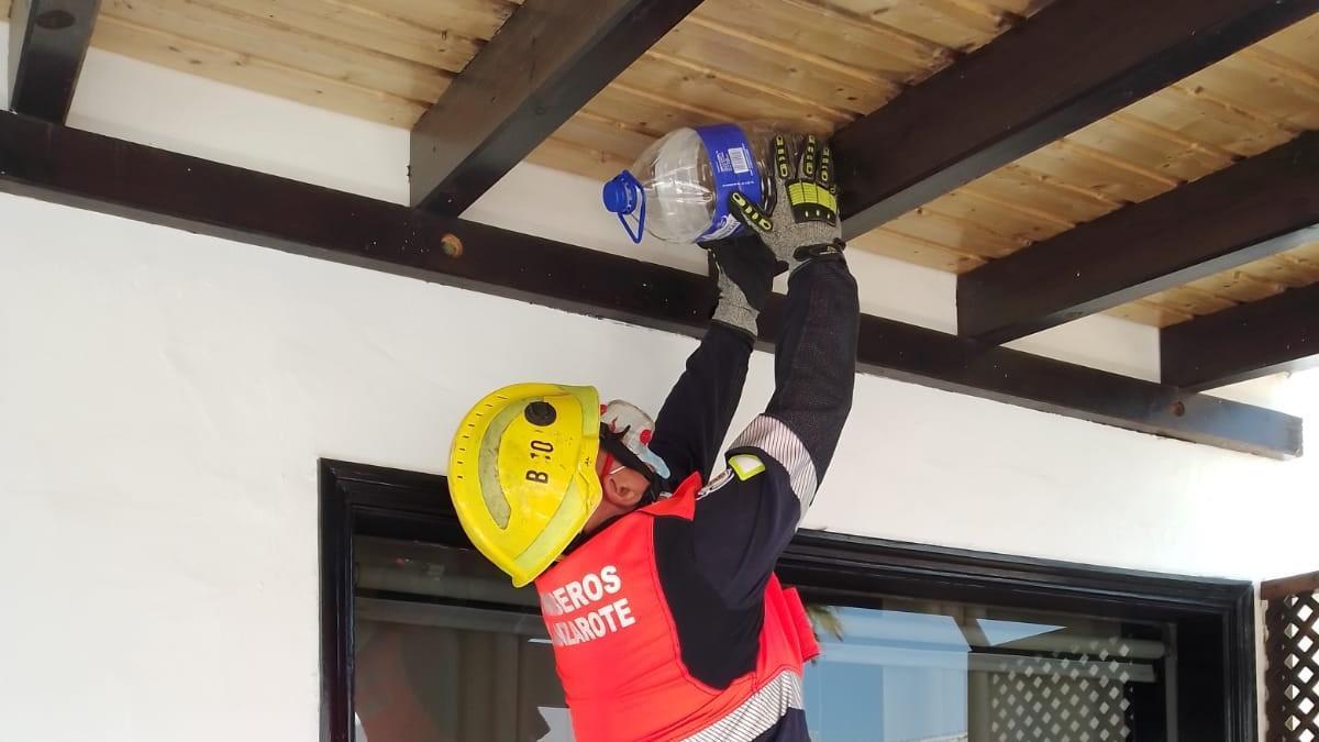Un bombero retira el avispero con una garrafa de plástico en la pérgola de una vivienda en Puerto del Carmen, en Lanzarote.