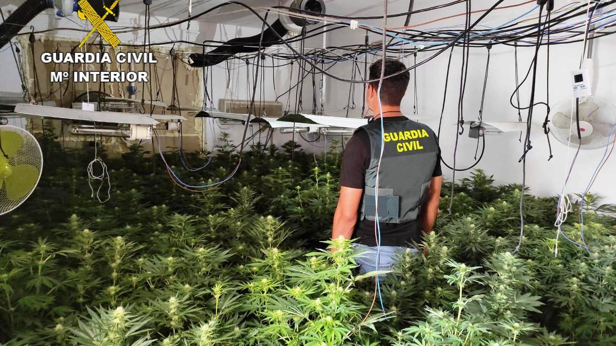 Plantas de marihuana halladas en la vivienda que ocupaba el detenido.