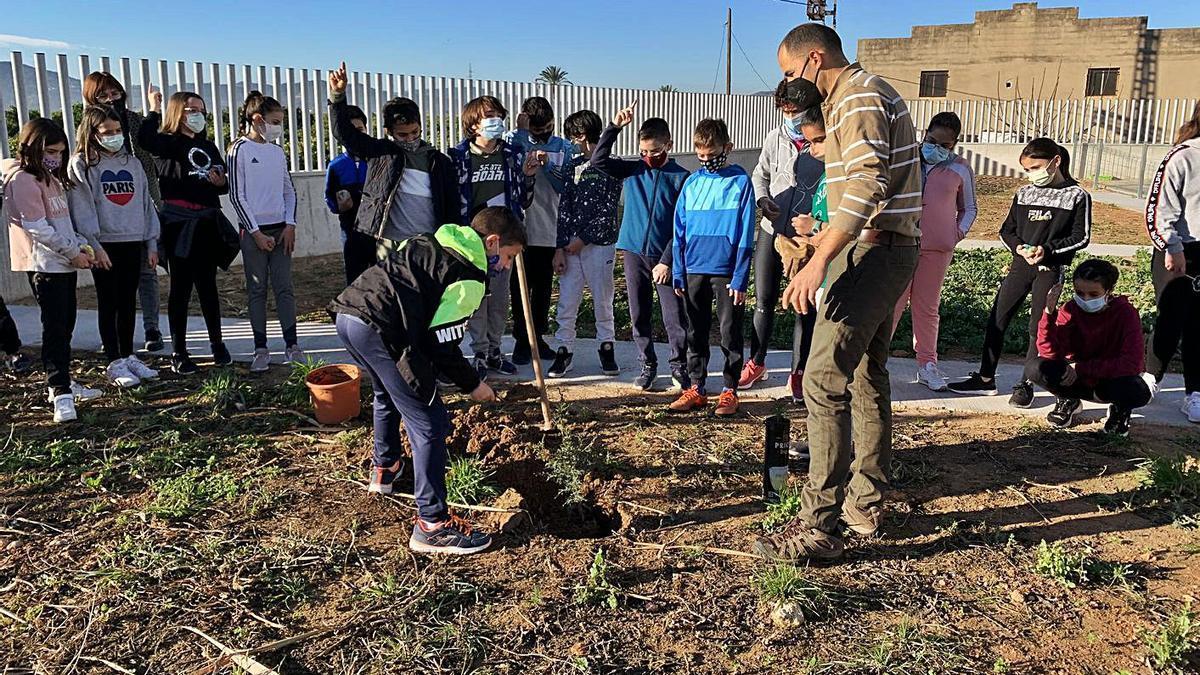 El CEIP Severí Torres planta un xiprer del Sàhara com a símbol de resistència