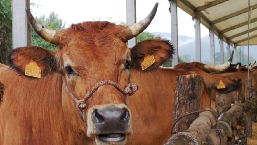 """El gracioso cartel de un ganadero que se ha hecho viral: """"Estoy hasta los mismísimos de correr detrás de las vacas"""""""