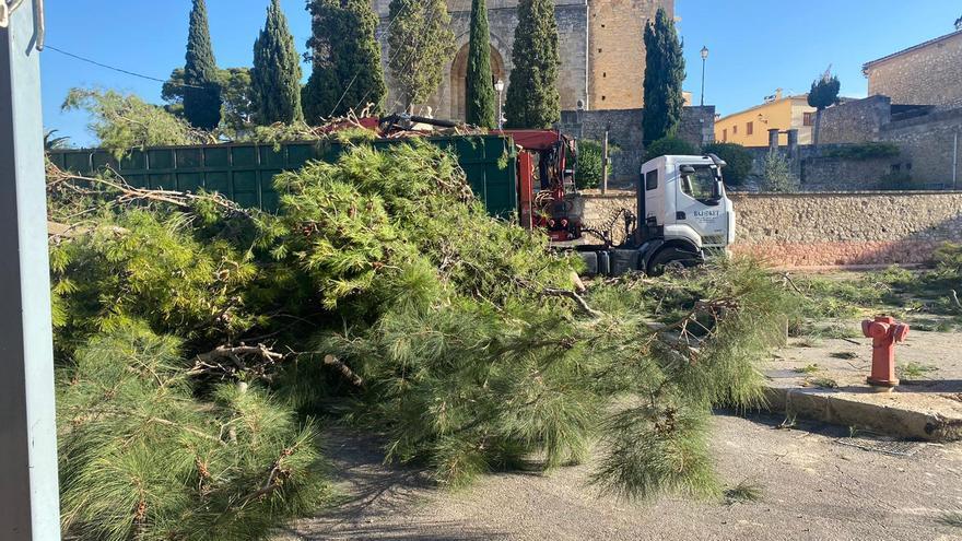 El Ayuntamiento tala todos los pinos de la Plaça de Selva