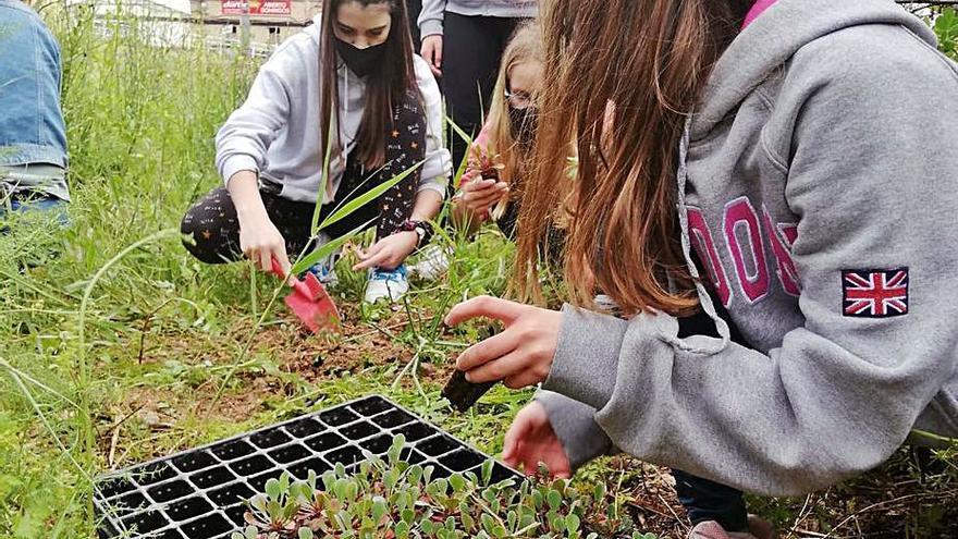 Los jóvenes de Càrcer plantan especies protegidas en el río