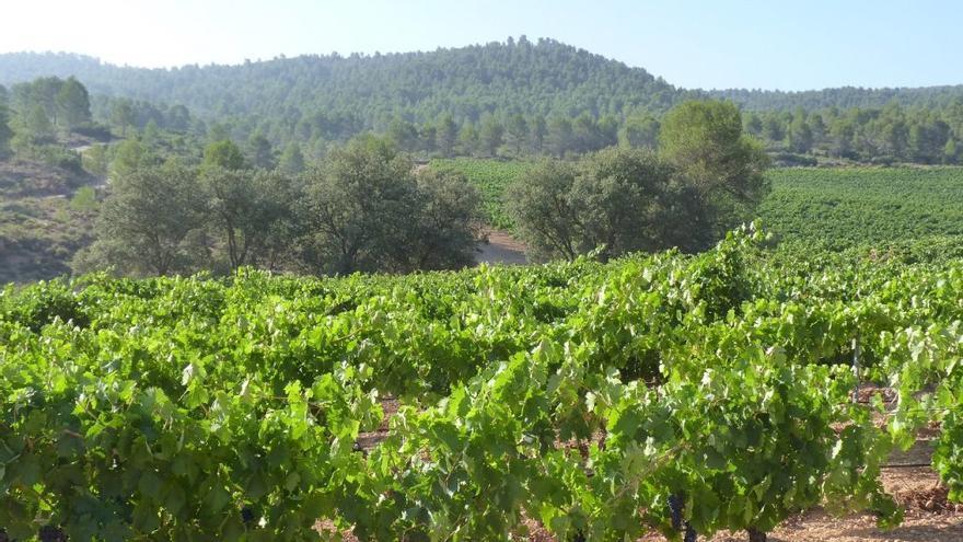 Finca San Blas, la bodega que da sentido a los vinos de parcela