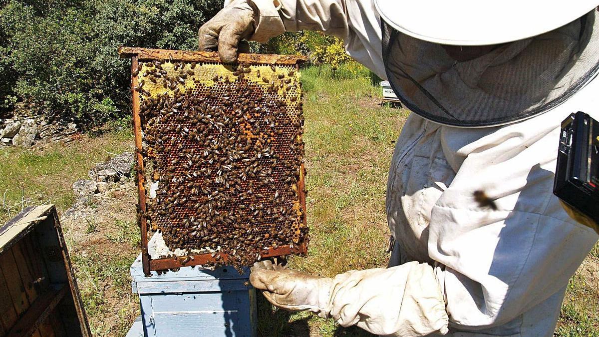Un apicultor zamorano cuida de sus abejas.   Emilio Fraile