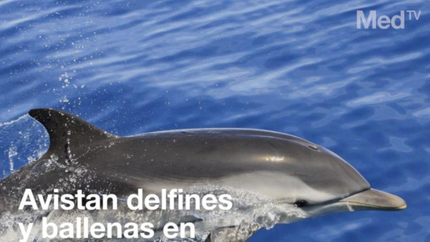 Avistan delfines y ballenas en Columbretes