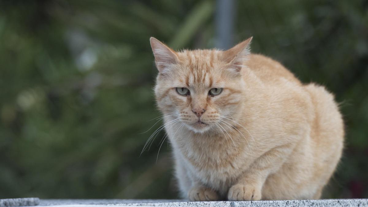 Imatge d'arxiu d'un gat.