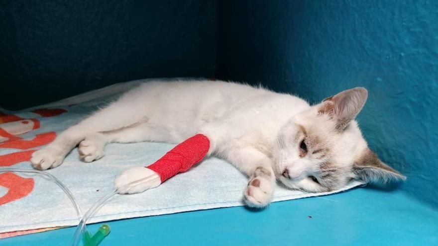 Difusión Felina denuncia más envenenamientos de gatos en la zona de Conde de Bugallal