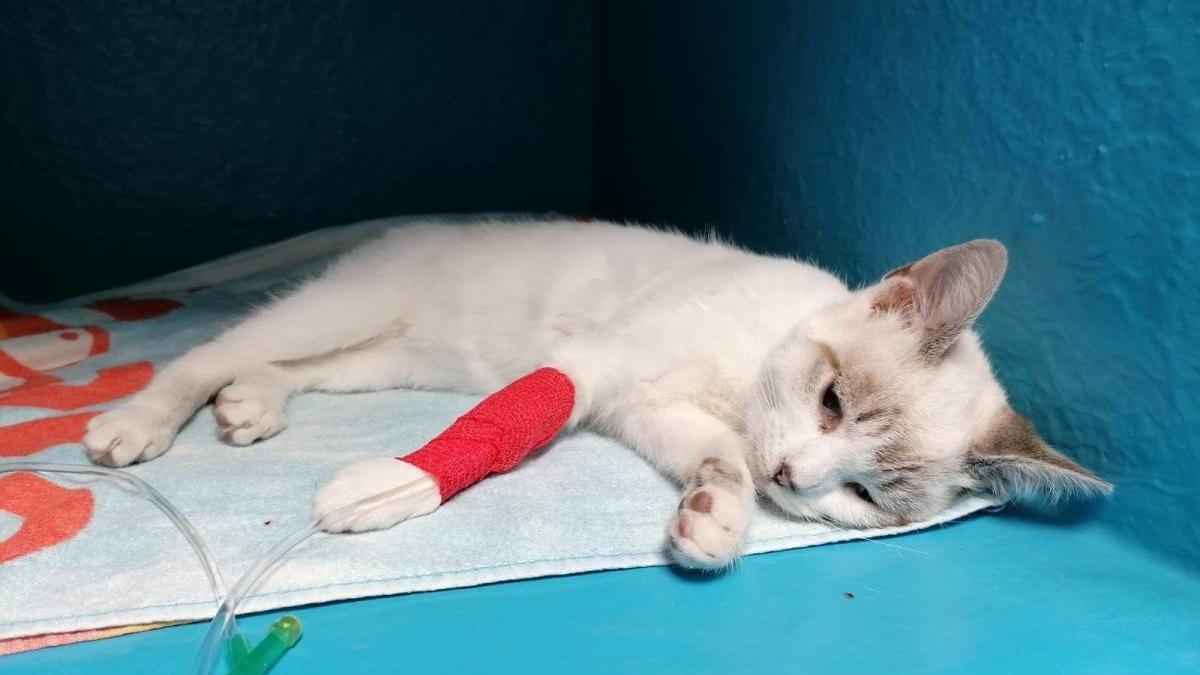 Uno de los gatos que fue envenenado en la colonia.