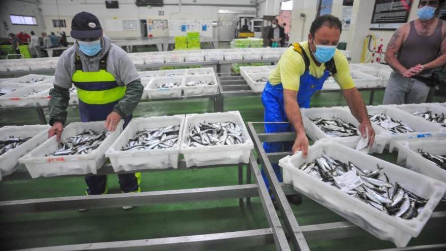 Un plan de 40.000 toneladas de sardina para 2021