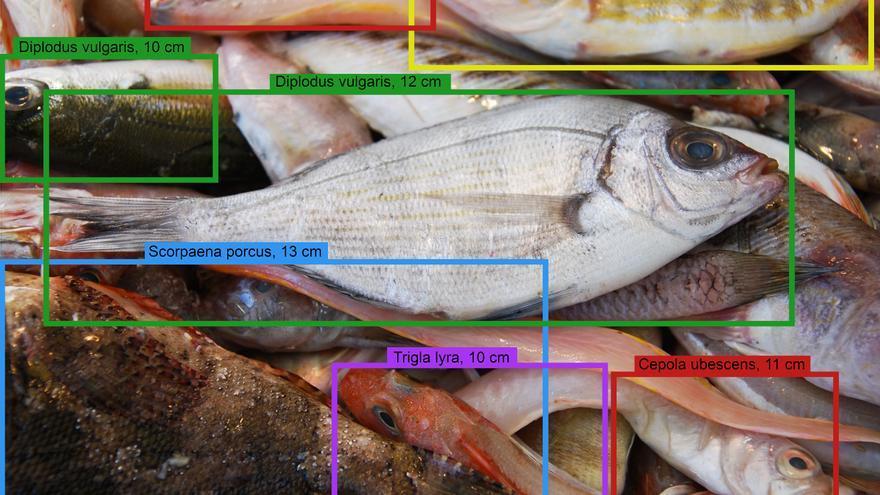 La Inteligencia Artificial aplicada a la pesca artesanal con DeepFish