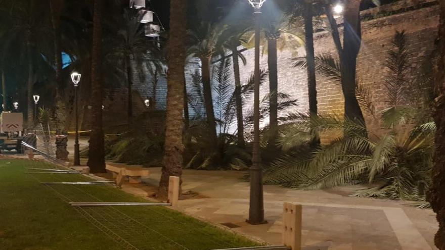 Die in Palma umgekippten Palmen waren gesund