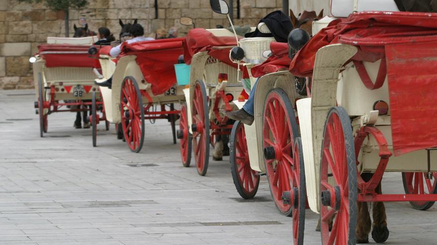 Rathaus will Elektro- statt Pferdekutschen an der Playa de Muro auf Mallorca