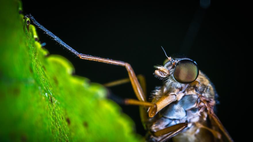 Una planta para eliminar los mosquitos de casa
