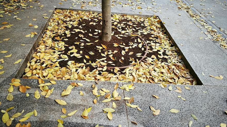Un otoño más seco y cálido de lo normal