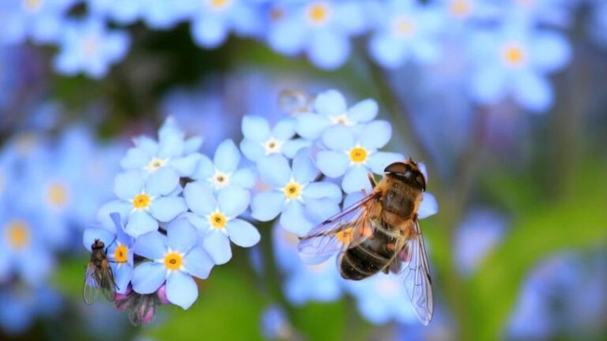 ¿Ha desaparecido ya el 25% de las especies de abejas?