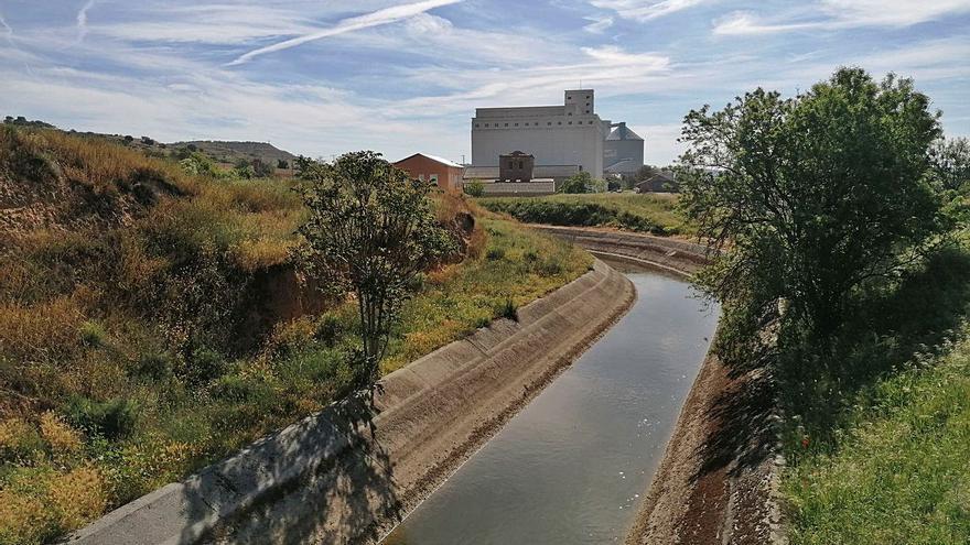 El canal Toro-Zamora promueve un estudio sobre el briozoo que obstruye los hidrantes