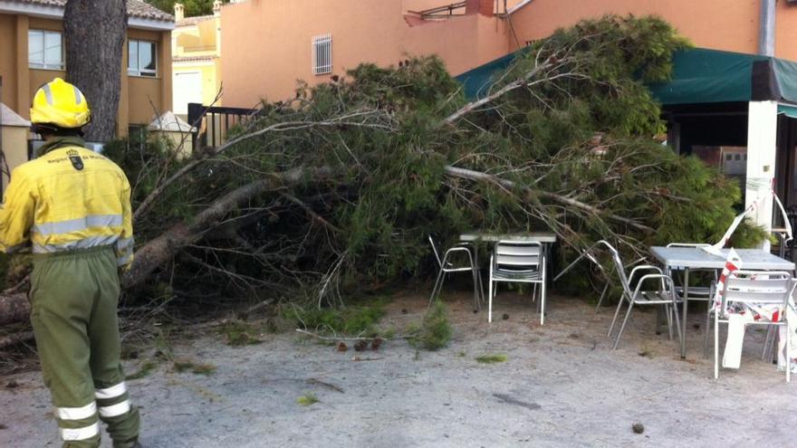 Cae una rama de grandes dimensiones sobre una terraza de El Niño de Mula
