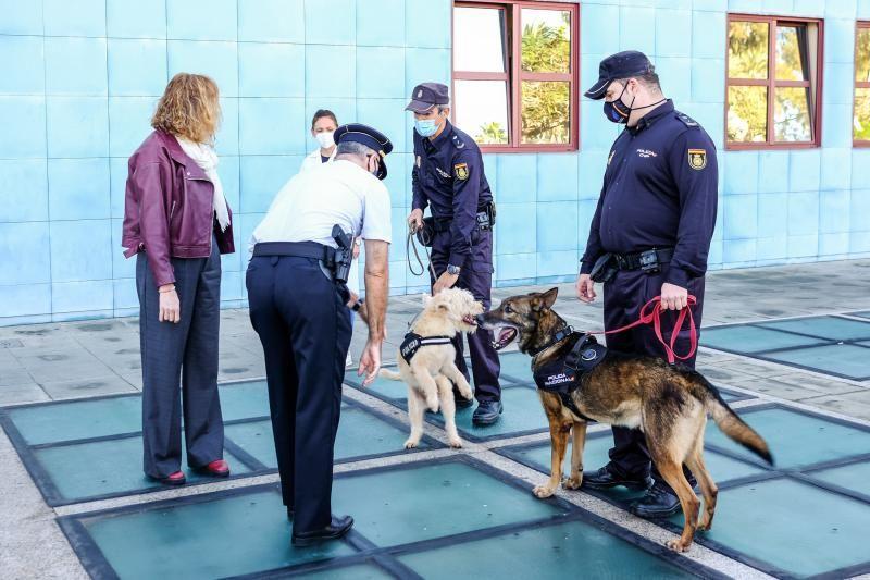 "La Policía Nacional entrega en adopción a ""Basco"""