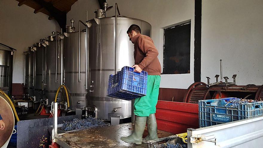 La DO Tierra del Vino de Zamora vendimia más de 700.000 kilogramos de uva en 2020