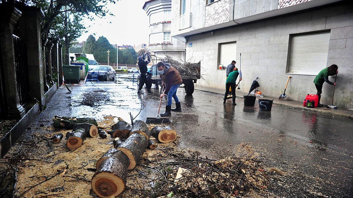Una empresa contratada por los propietarios del árbol realizando las labores de recogida ayer.    // I. ABELLA