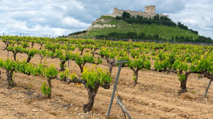 La CE amplía las ayudas al sector vitivinícola