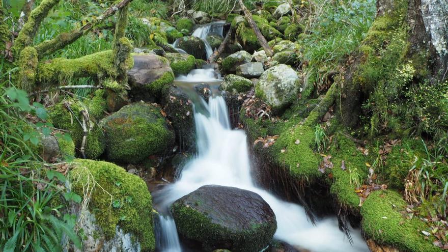 Rutas por Asturias: en el mágico bosque de Muniellos