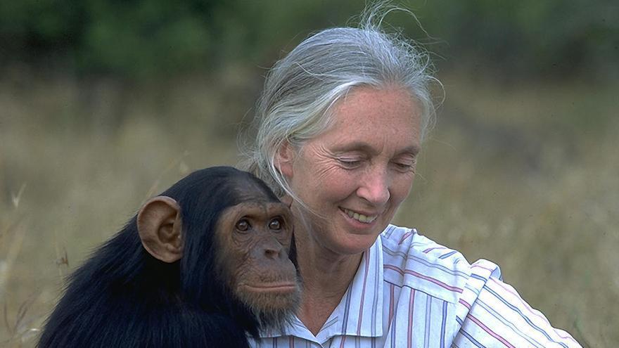 Recullen mòbils per finançar programes de conservació al Congo i Senegal