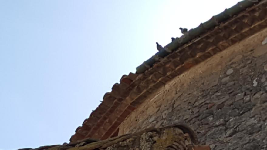 Borrassà engega actuacions contra els coloms i mosquits