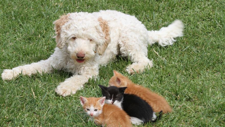 Neues Tierschutzgesetz: Das sind die 10 wichtigsten Punkte