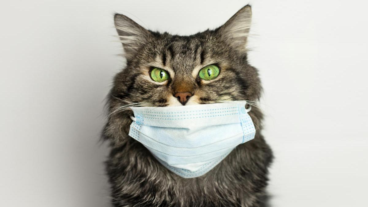 Los animales recibirán asistencia sanitaria gratis.