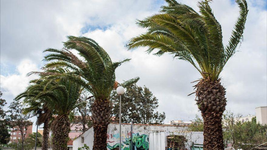 Nivel máximo amarillo por vientos en La Palma, La Gomera y El Hierro
