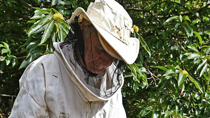 Las explotaciones apícolas y el censo de colmenas baten su récord histórico en Galicia