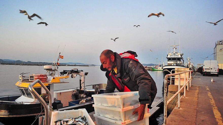 """Un plan para la sardina """"a espaldas del sector"""""""
