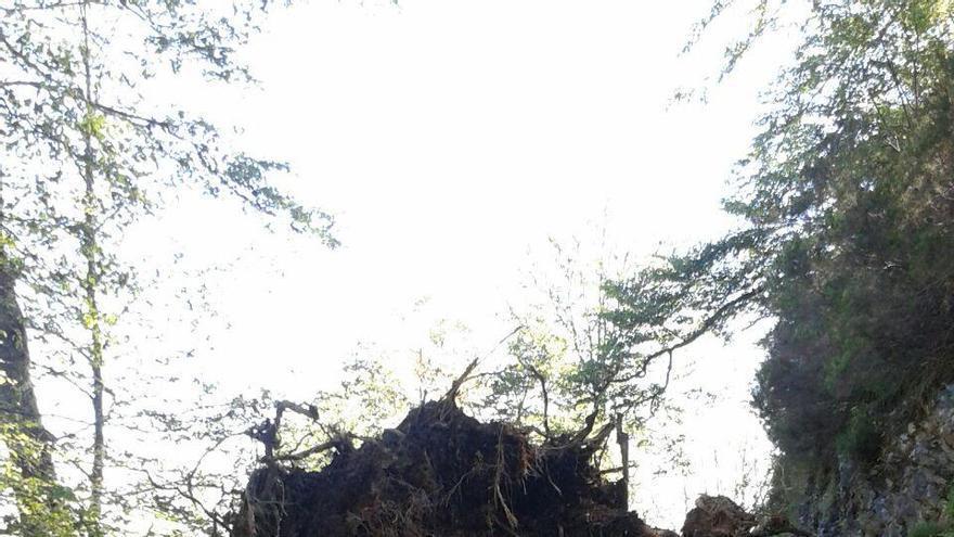Un argayo dificulta el paso a los montes ganaderos de Aller