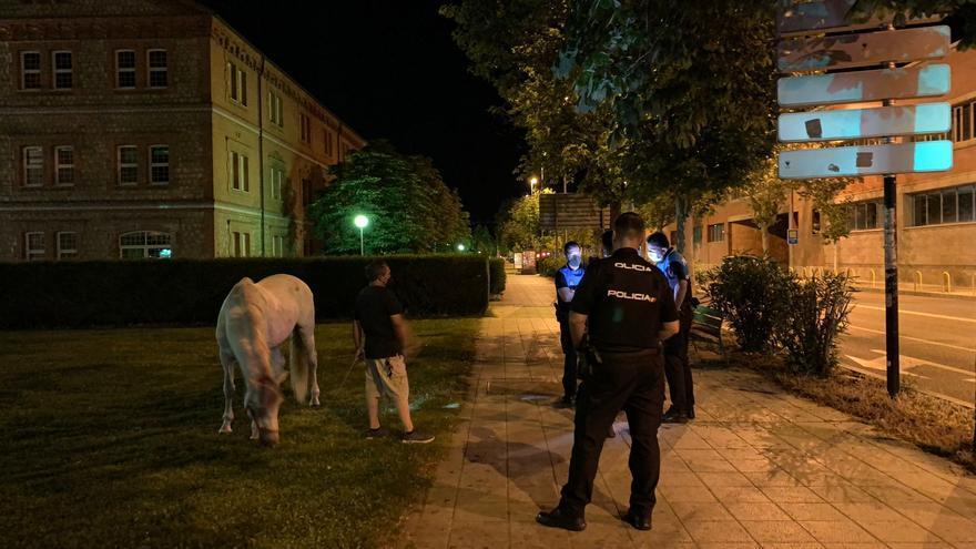 VÍDEO | Un caballo suelto, a galope por Zamora capital