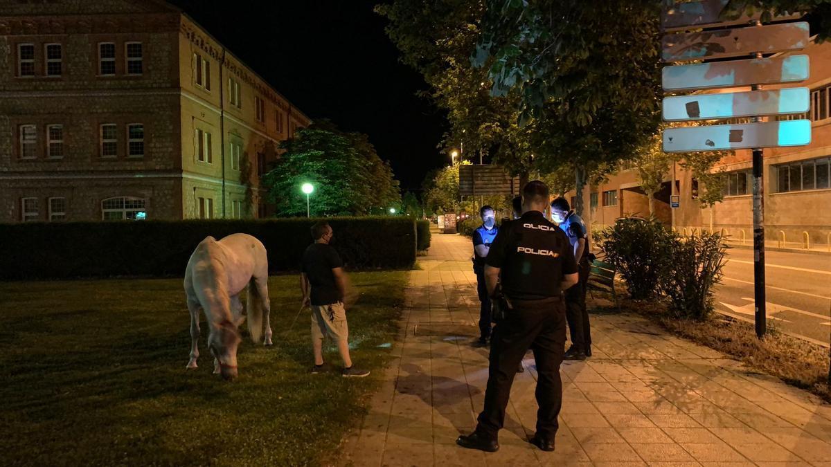 El caballo escapado pasta en el césped del Campus Viriato.